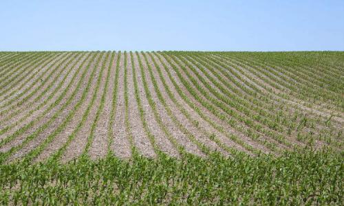 玉米苗后除草剂有哪些?