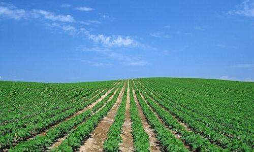 农村创业的15条成功之路