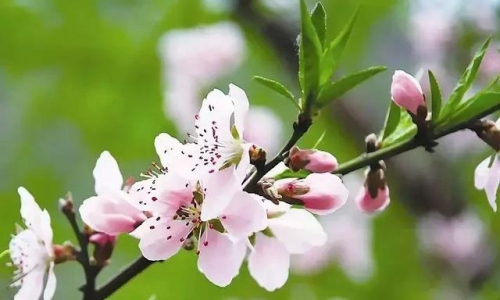 果树开花也不少,为啥就是坐不住果?原来是因为这样!