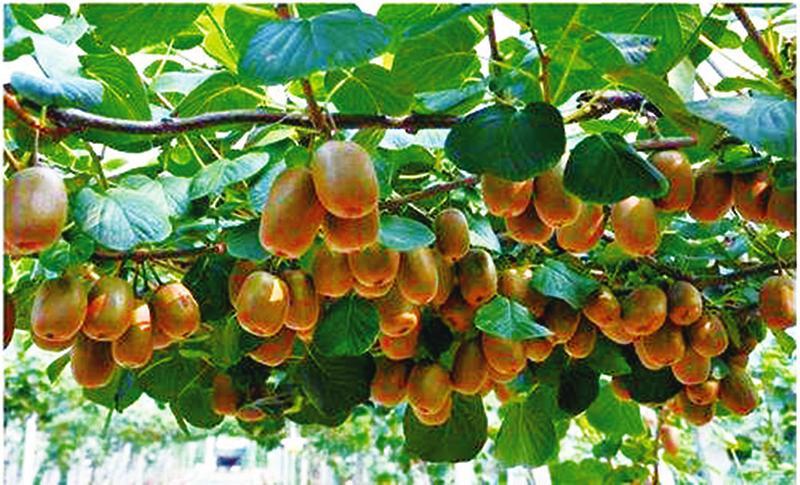 http://www.7loves.org/jiankang/653691.html