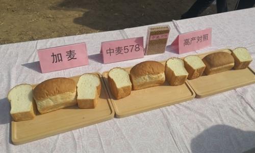 我国育成高产高筋优质小麦新品种