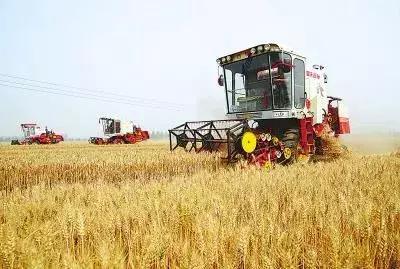 山东一高产攻关田亩产828.7公斤,创中国冬小麦单产最高纪录