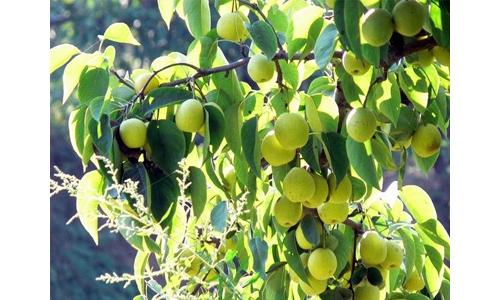 专家提醒:秋季果树施肥要这么做!_中国农科新闻网