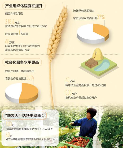农民组成联合体闯市场订单生产这样种地有赚头