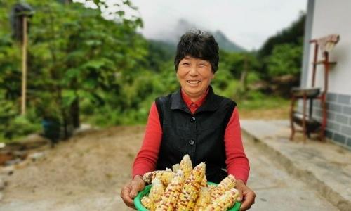 宁陕狮子坝村地里种出五颜六色彩玉米好看好吃还增收