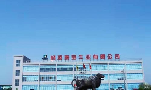 """站在""""上合""""历史坐标点勇做中国牛肉第一品牌"""