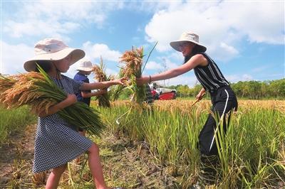 """发挥崇明生态优势打造""""两无化""""水稻"""