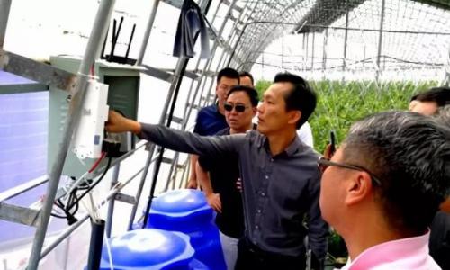 杨凌:信息技术为现代农业发展点亮智慧之光