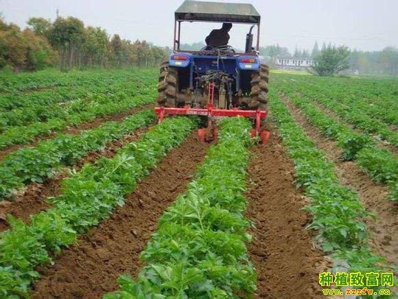 蔬菜轮换种植16招招招增产又增收