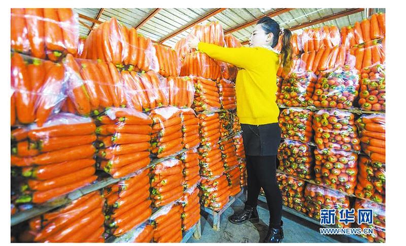 小萝卜长成大产业