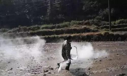 土传病害严重,用生石灰就能搞定!真是好办法