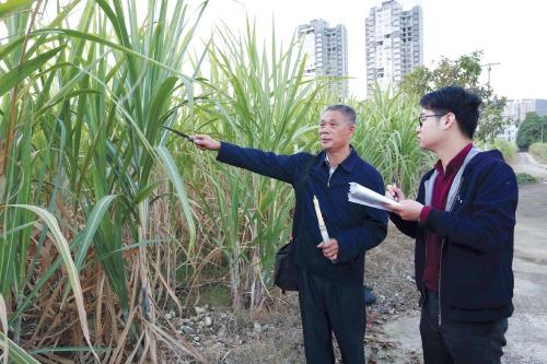 """为了""""甜蜜""""的收获——记广西柳城县甘蔗研究中心高级农艺师卢文祥"""