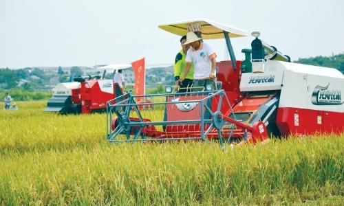 水稻侧深施肥测产结果令人欣喜——产量减幅有限 品质更高一筹
