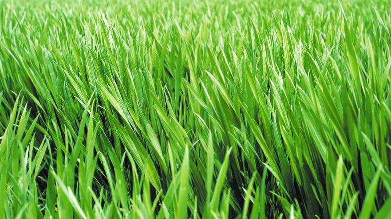 2020年小麦重大病虫害预测