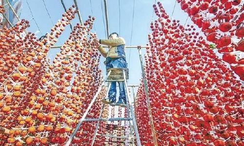 """河北省唐山市创建""""国家农产品质量安全市""""——全过程提质 全环节管控 全 ..."""