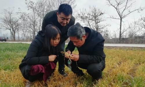 陕西全力开展小麦冬前田间管理工作